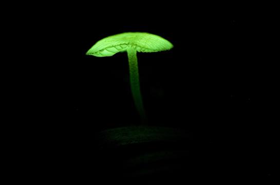 glowshroom