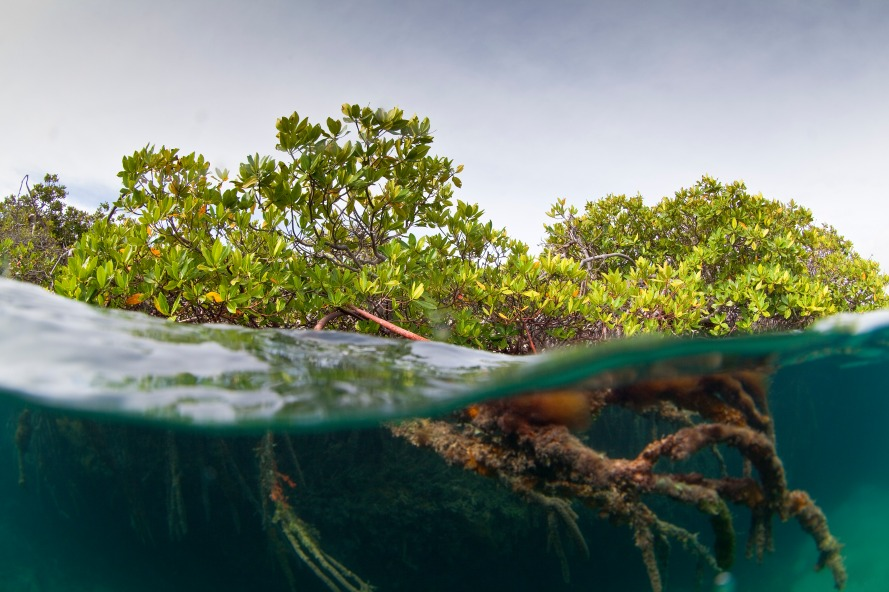 The Nature Conservancy / Cuba Assignment